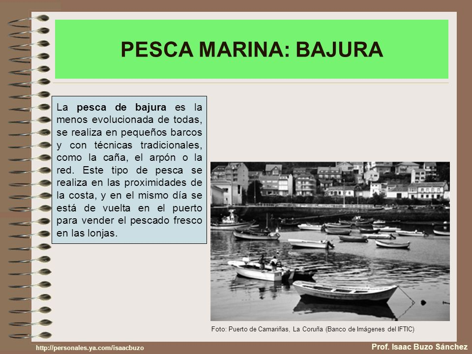 PESCA MARINA: BAJURA