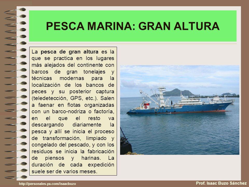 PESCA MARINA: GRAN ALTURA