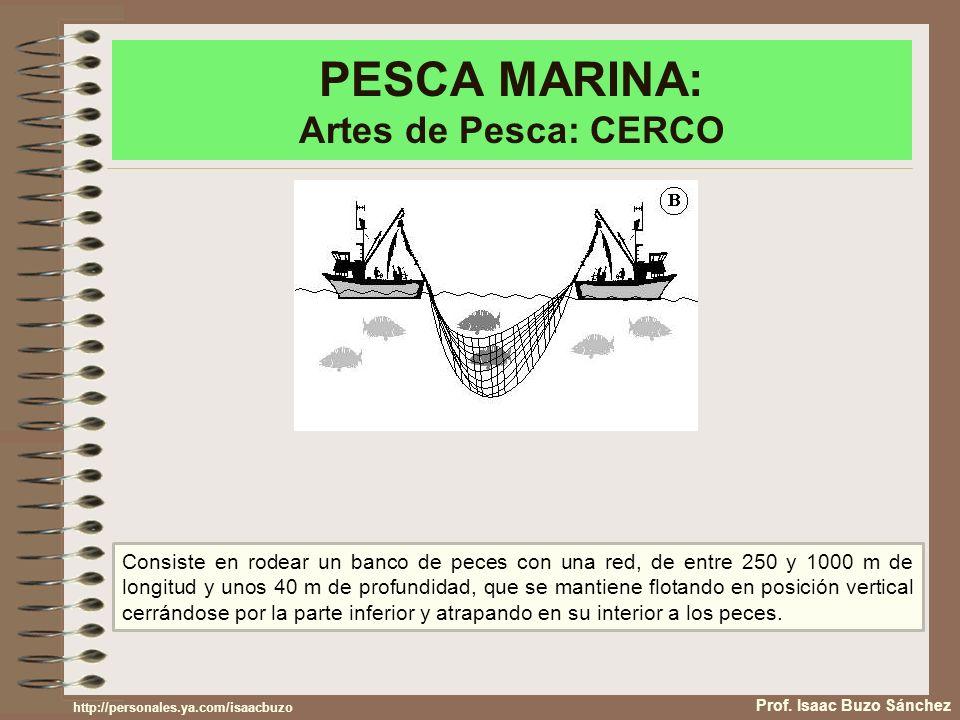 PESCA MARINA: Artes de Pesca: CERCO