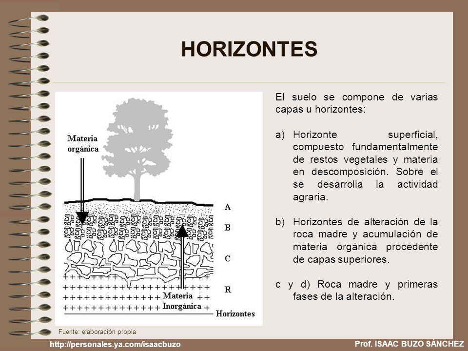 HORIZONTES El suelo se compone de varias capas u horizontes: