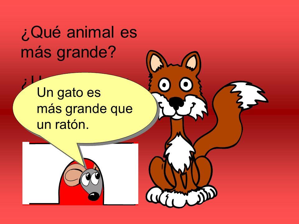 ¿Qué animal es más grande ¿Un ratón o un gato