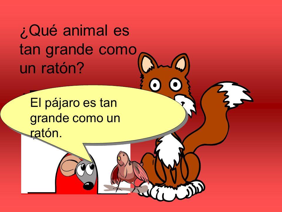 ¿Qué animal es tan grande como un ratón