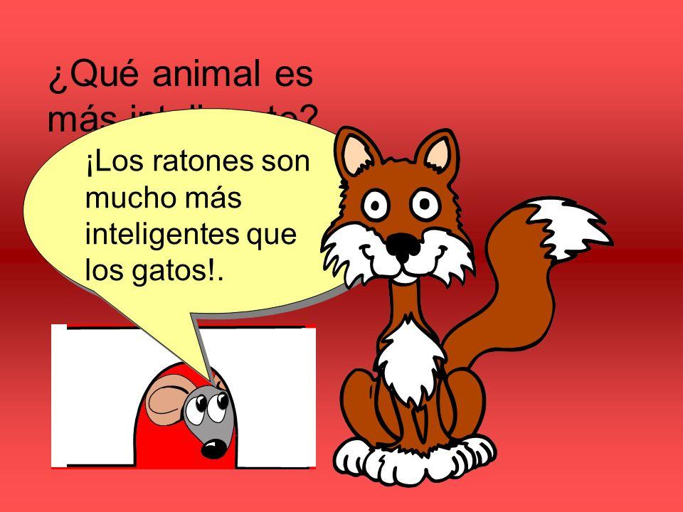 ¿Qué animal es más inteligente ¿Los gatos o los ratónes