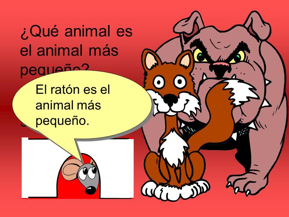 ¿Qué animal es el animal más pequeño