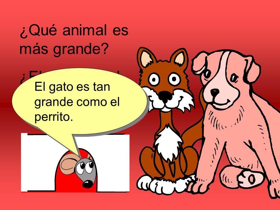 ¿Qué animal es más grande ¿El perrito o el gato