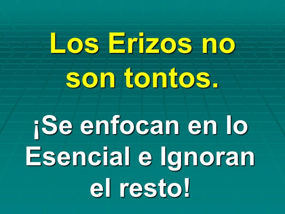 Los Erizos no son tontos.
