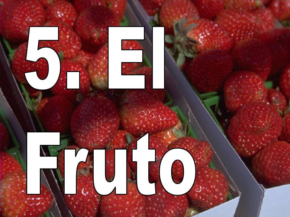 5. El Fruto