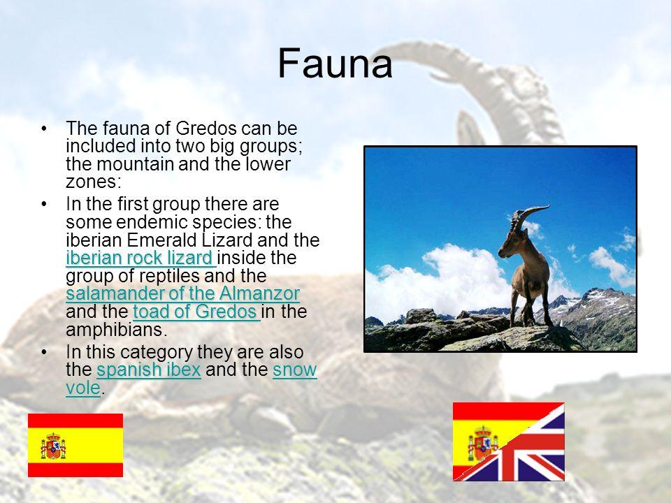 Fauna The fauna of Gredos can be included into two big groups; the mountain and the lower zones: