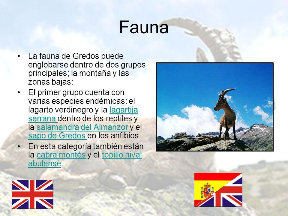 Fauna La fauna de Gredos puede englobarse dentro de dos grupos principales; la montaña y las zonas bajas: