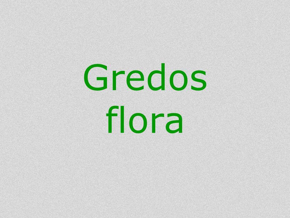 Gredos flora
