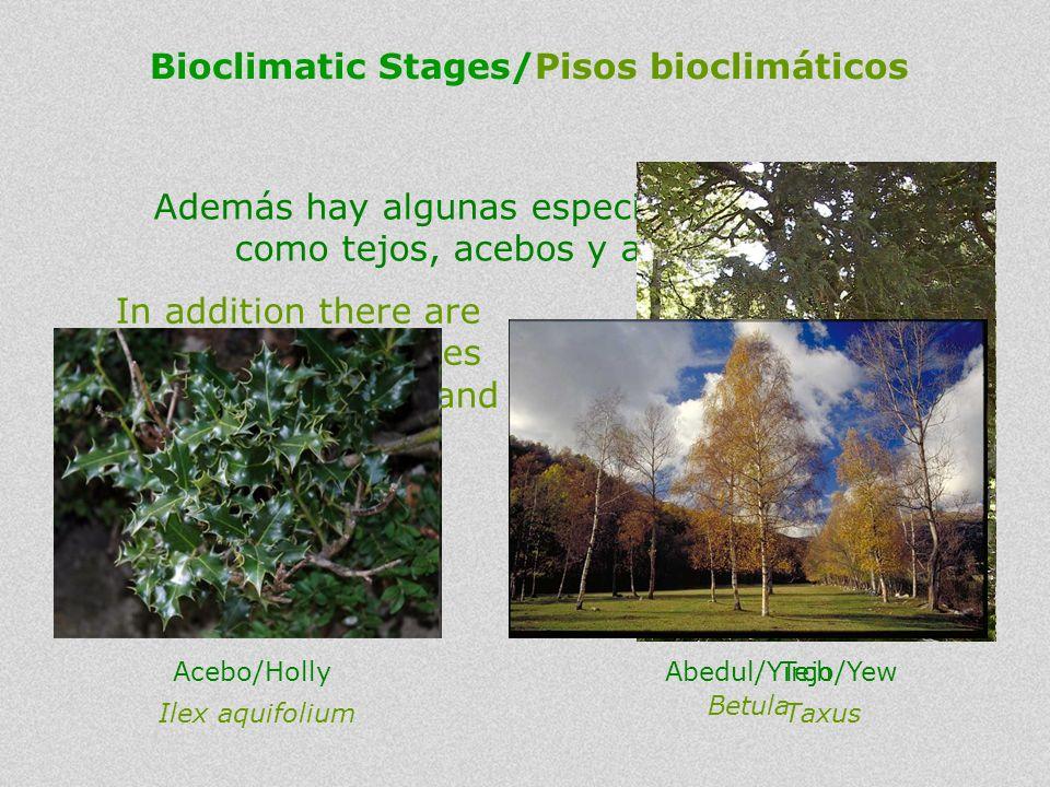 Bioclimatic Stages/Pisos bioclimáticos