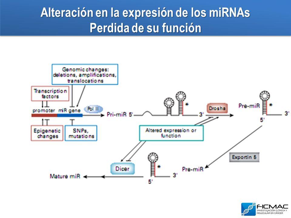 Alteración en la expresión de los miRNAs Perdida de su función