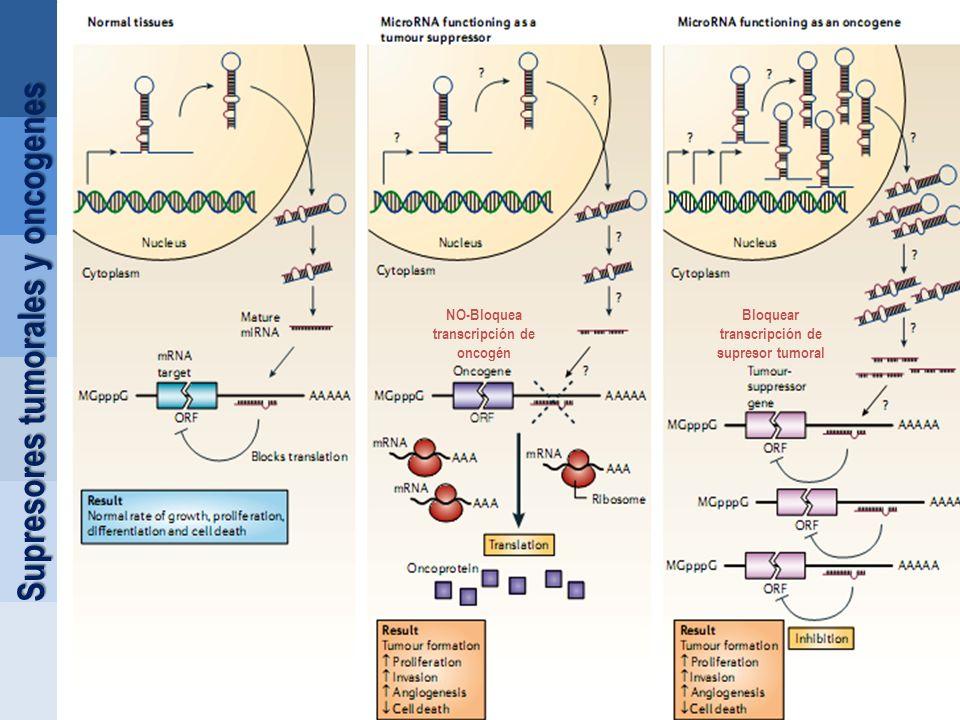 Supresores tumorales y oncogenes