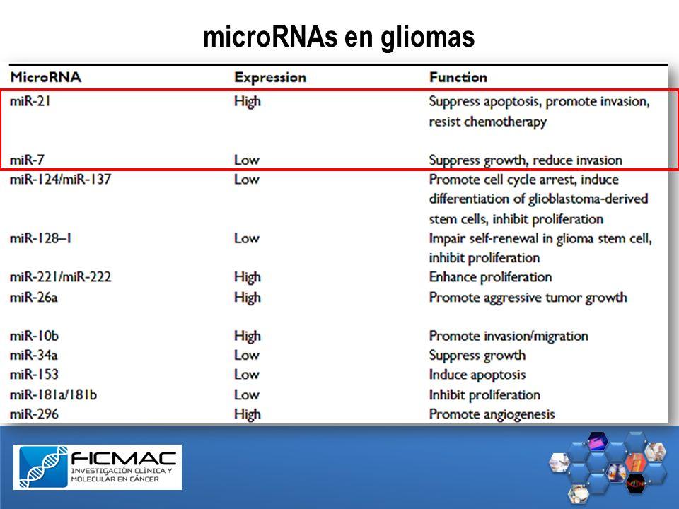 microRNAs en gliomas