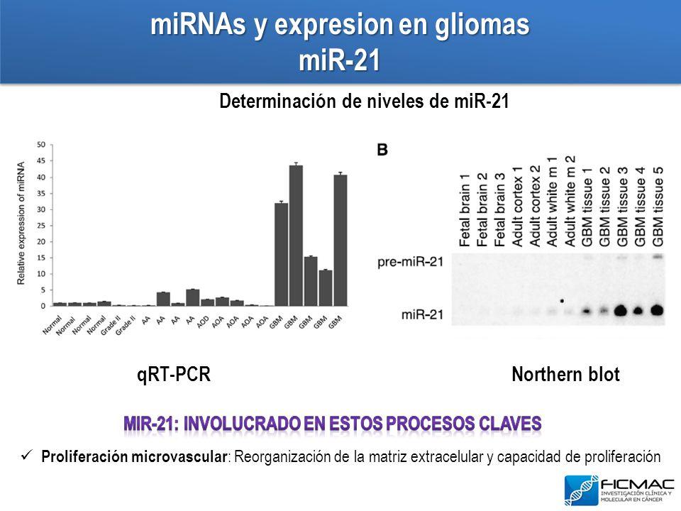 miRNAs y expresion en gliomas miR-21