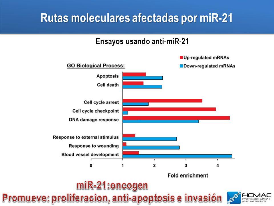 Rutas moleculares afectadas por miR-21