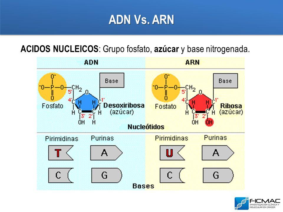ADN Vs. ARN ACIDOS NUCLEICOS: Grupo fosfato, azúcar y base nitrogenada.