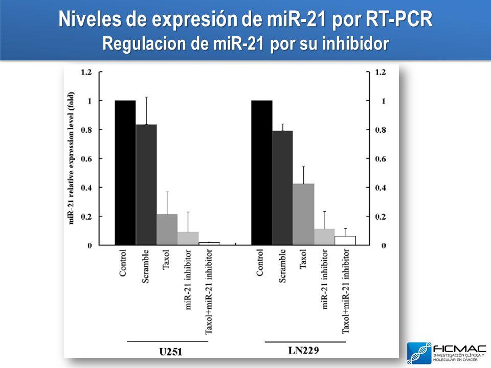 Niveles de expresión de miR-21 por RT-PCR Regulacion de miR-21 por su inhibidor