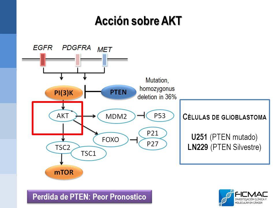 Células de glioblastoma Perdida de PTEN: Peor Pronostico