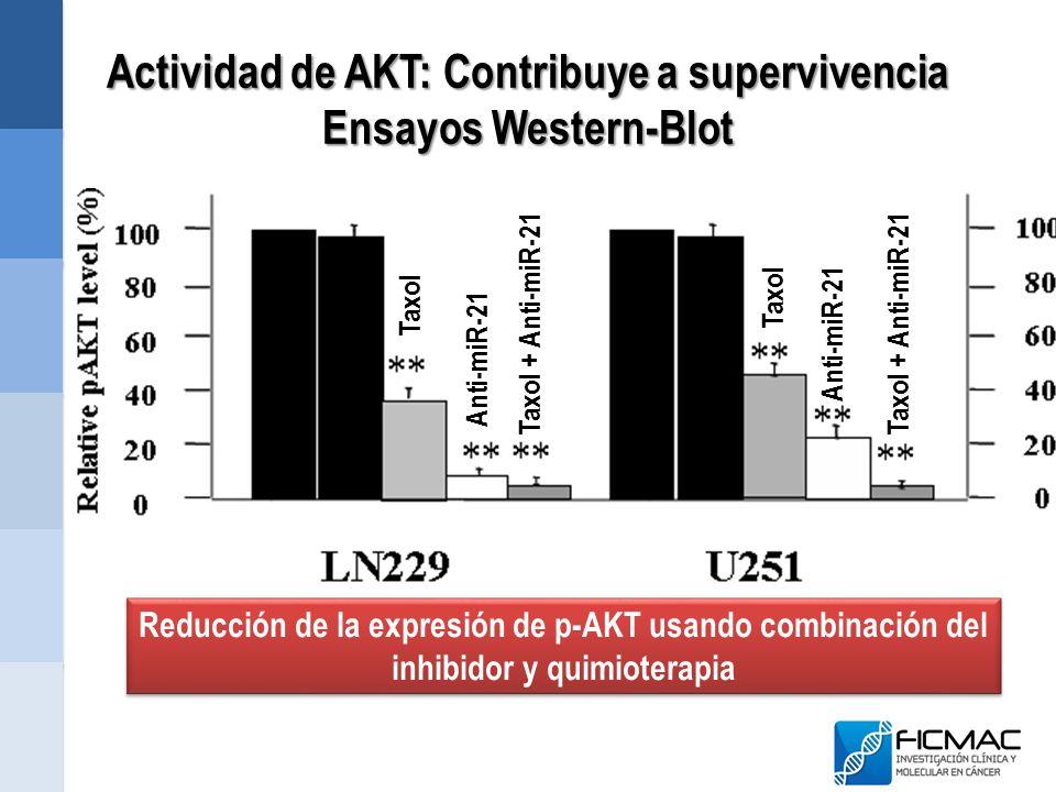 Actividad de AKT: Contribuye a supervivencia Ensayos Western-Blot