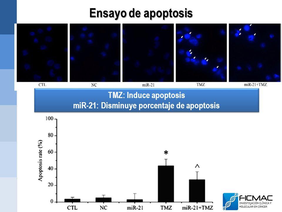 miR-21: Disminuye porcentaje de apoptosis