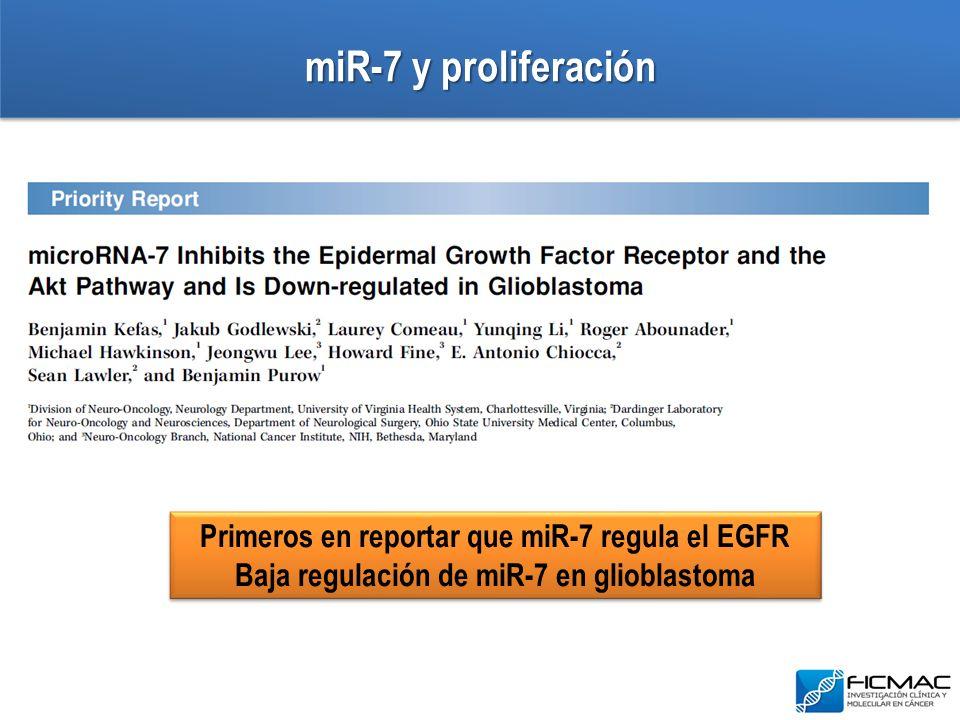 miR-7 y proliferación Primeros en reportar que miR-7 regula el EGFR