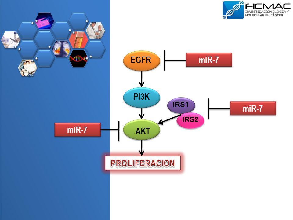 miR-7 miR-7 miR-7 AKT PROLIFERACION