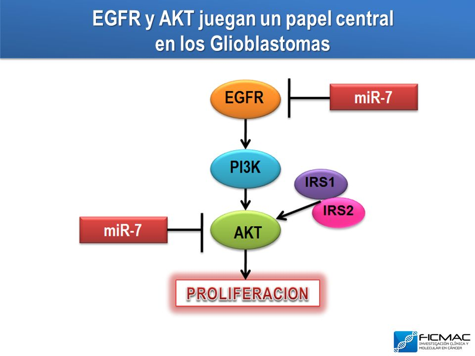 EGFR y AKT juegan un papel central en los Glioblastomas