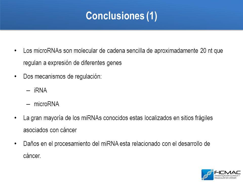 Conclusiones (1) Los microRNAs son molecular de cadena sencilla de aproximadamente 20 nt que regulan a expresión de diferentes genes.