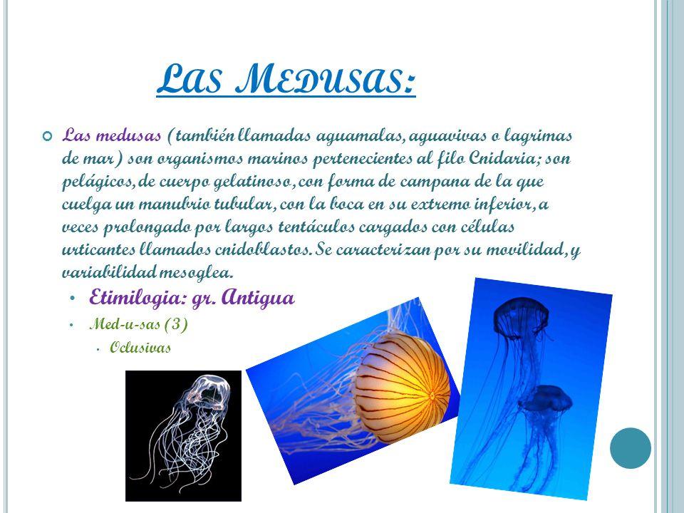 Las Medusas: Etimilogia: gr. Antigua