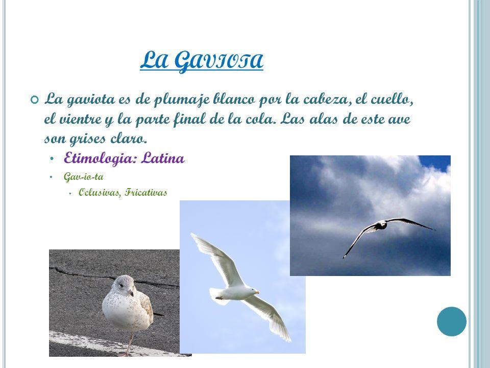 La Gaviota La gaviota es de plumaje blanco por la cabeza, el cuello, el vientre y la parte final de la cola. Las alas de este ave son grises claro.