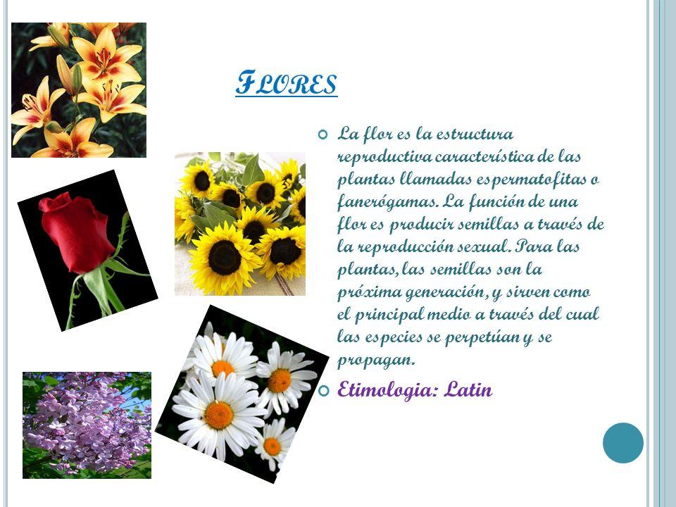 Flores Etimologia: Latin