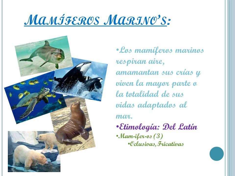 Mamíferos Marino's:Los mamíferos marinos respiran aire, amamantan sus crías y viven la mayor parte o la totalidad de sus vidas adaptados al mar.