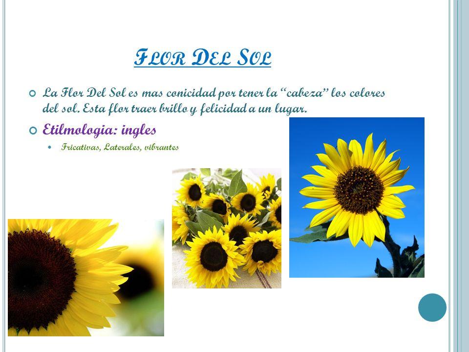 Flor Del Sol Etilmologia: ingles