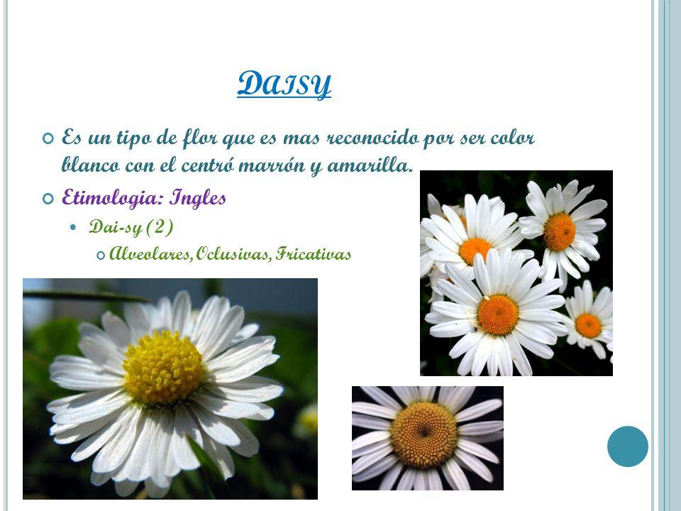 Daisy Es un tipo de flor que es mas reconocido por ser color blanco con el centró marrón y amarilla.