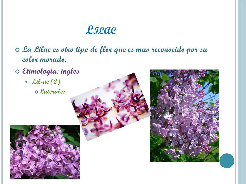 LilacLa Lilac es otro tipo de flor que es mas reconocido por su color morado. Etimologia: ingles. Lil-ac (2)
