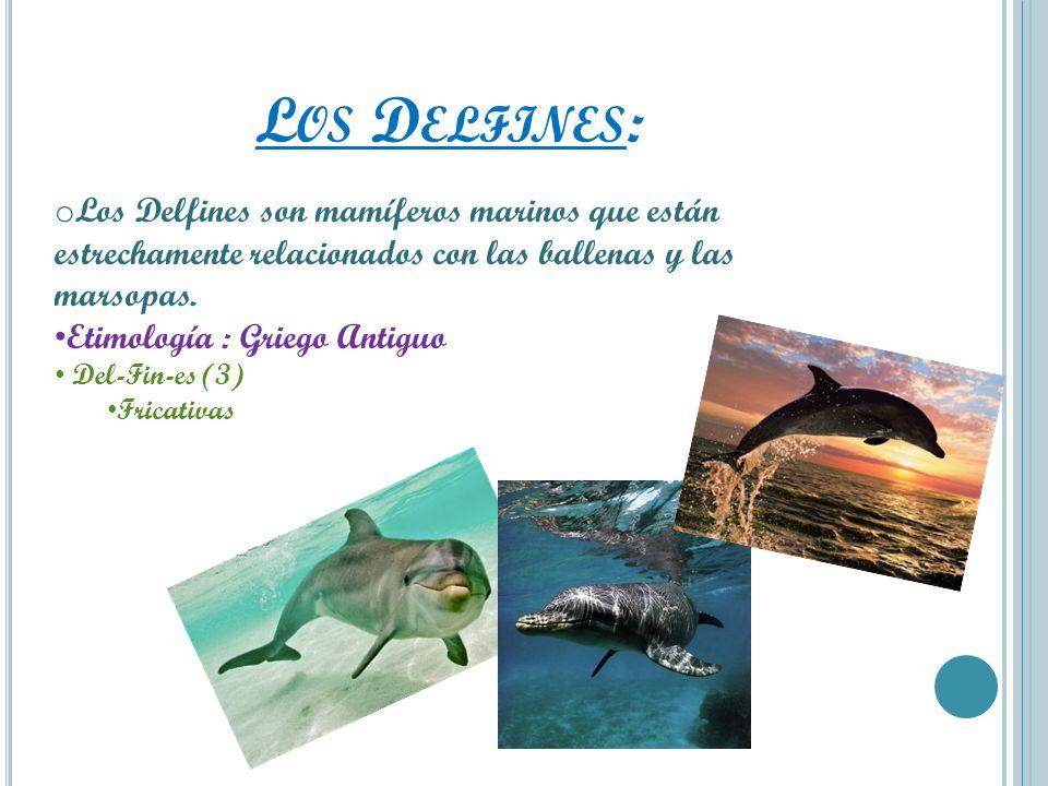 Los Delfines:Los Delfines son mamíferos marinos que están estrechamente relacionados con las ballenas y las marsopas.