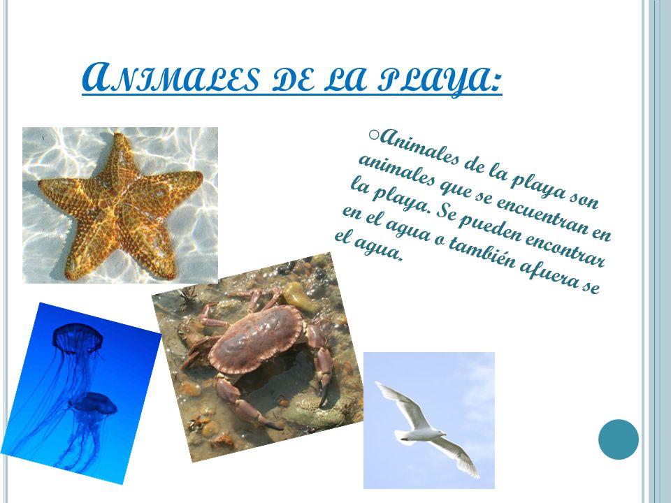 Animales de la playa:Animales de la playa son animales que se encuentran en la playa.