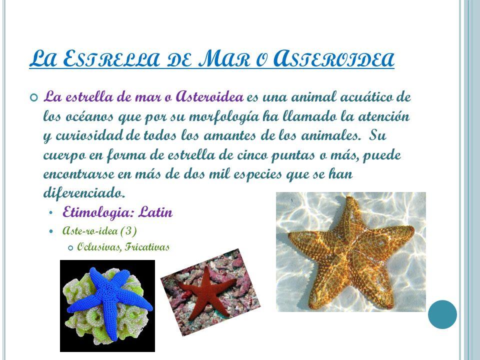 La Estrella de Mar o Asteroidea