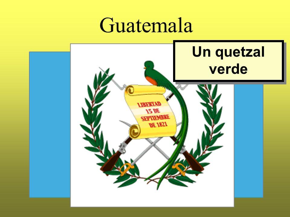 Guatemala Un quetzal verde