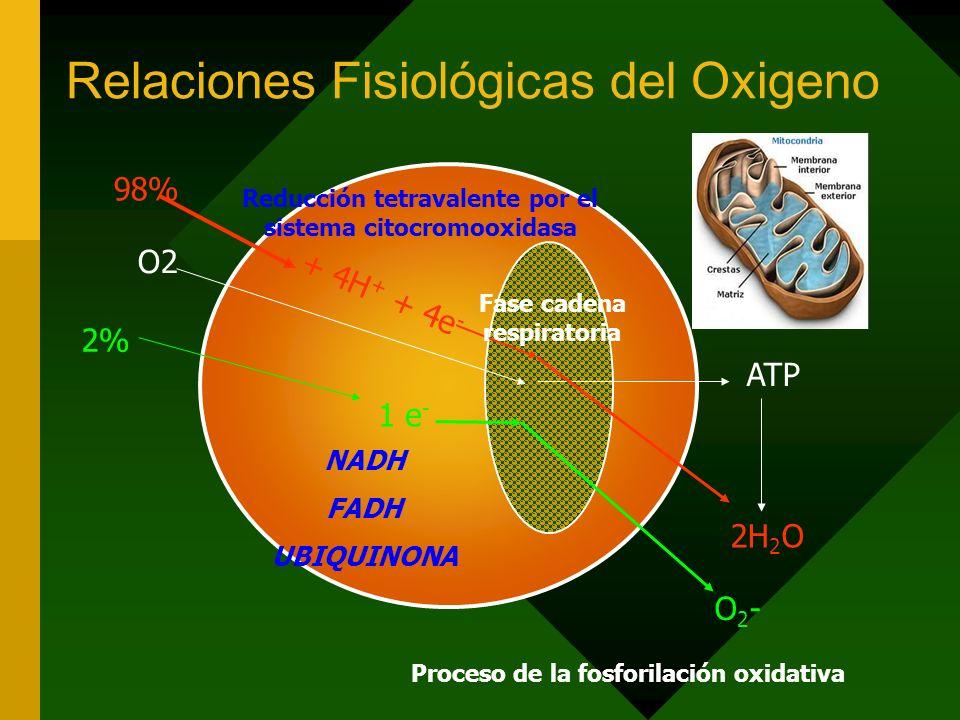 Relaciones Fisiológicas del Oxigeno