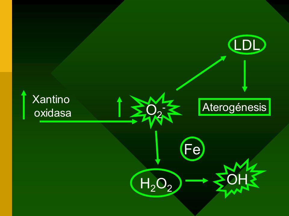LDL Xantino oxidasa O2- Aterogénesis Fe OH H2O2