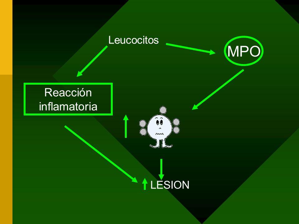 Leucocitos LESION MPO Reacción inflamatoria