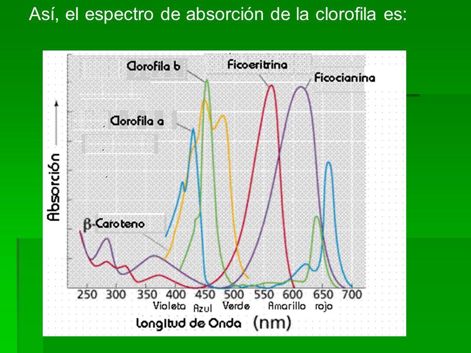 Así, el espectro de absorción de la clorofila es: