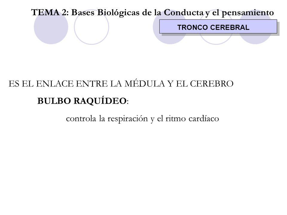 TEMA 2: Bases Biológicas de la Conducta y el pensamiento