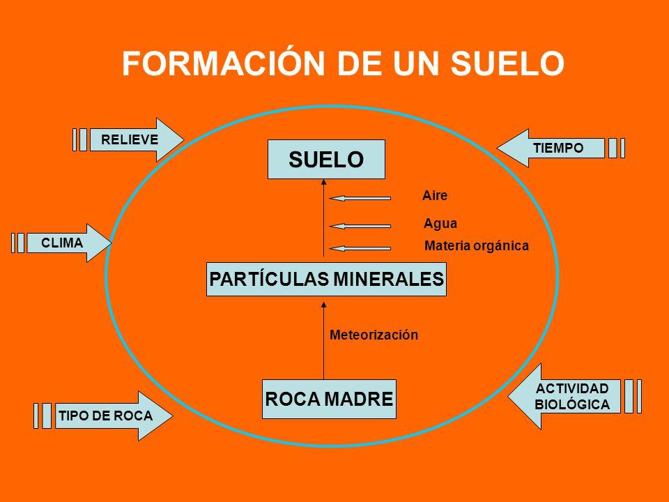 FORMACIÓN DE UN SUELO SUELO PARTÍCULAS MINERALES ROCA MADRE RELIEVE