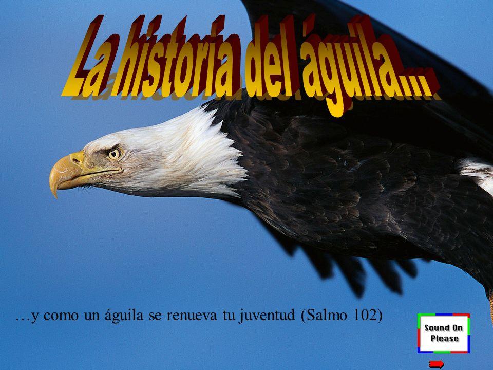 La historia del águila... …y como un águila se renueva tu juventud (Salmo 102)