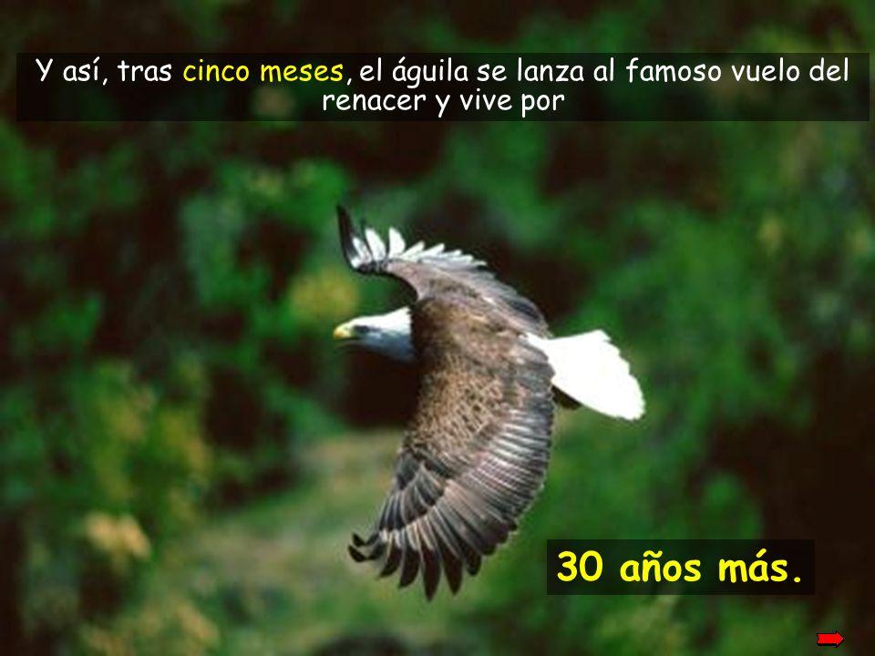 Y así, tras cinco meses, el águila se lanza al famoso vuelo del renacer y vive por