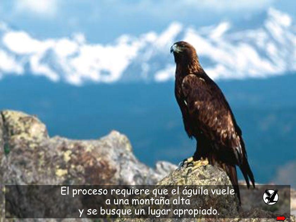 El proceso requiere que el águila vuele a una montaña alta