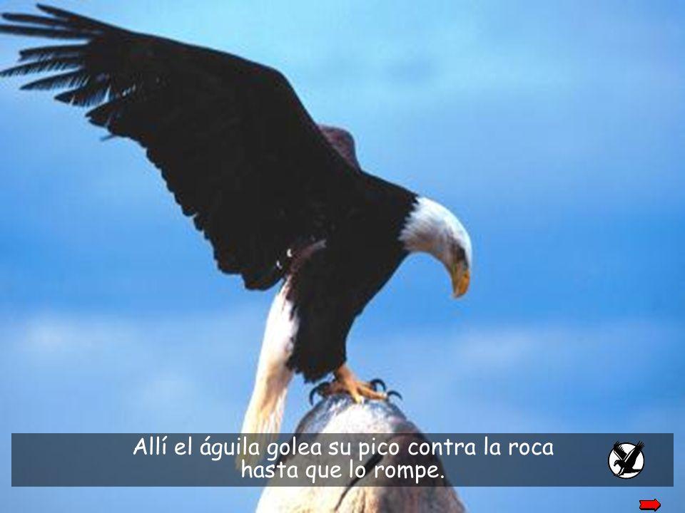 Allí el águila golea su pico contra la roca